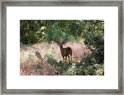 You Looking At Me Framed Print by Richard Verkuyl