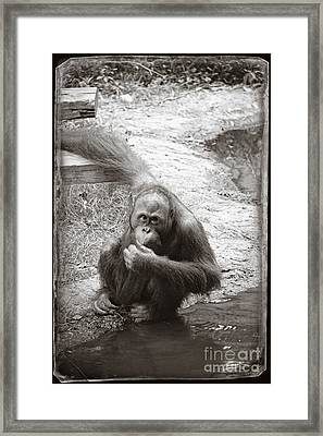 You Looking At Me Framed Print by Sandy Adams