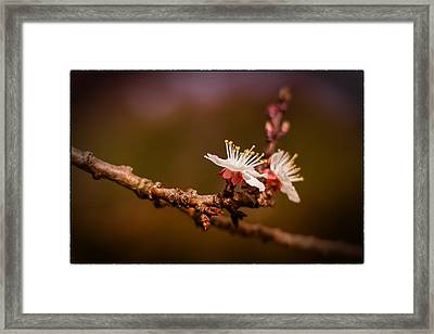 Framed Print featuring the photograph You Make Me Blossom by Tim Nichols