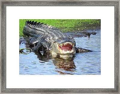 You May Think I'm Smiling Framed Print by Rosalie Scanlon