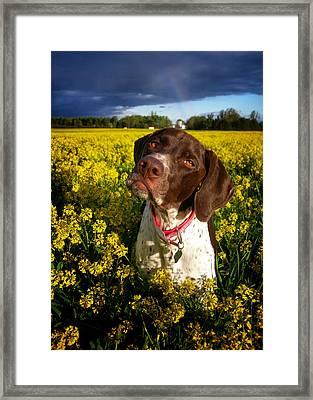 You Say I Am Three Framed Print by Brook Burling