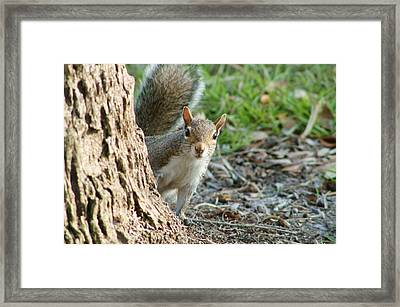 You Still Following Me Framed Print