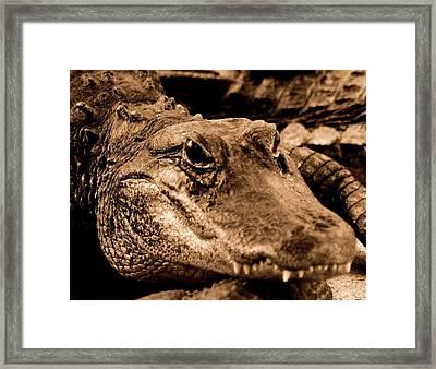 You Talkin To Me Framed Print by Lisa Scott