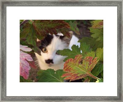 You Want To See Me Framed Print by David Du Hempsey