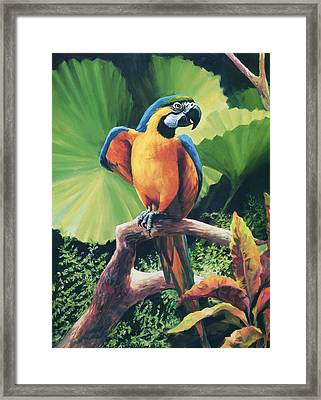 You Got To Be Kidding Framed Print by Laurie Hein