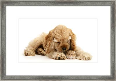 You'll Be Fine, Little Guy Framed Print