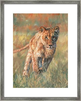 Framed Print featuring the painting Youn Lion by David Stribbling