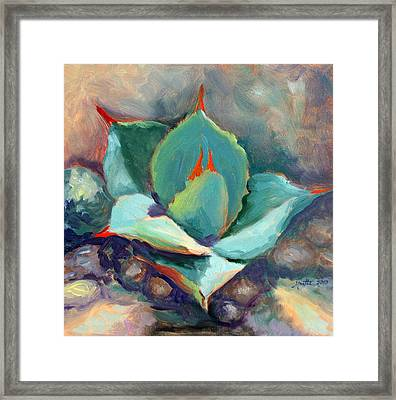 Young Agave Framed Print by Athena Mantle
