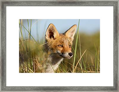 Young And Eager - Red Fox Kit Framed Print by Roeselien Raimond