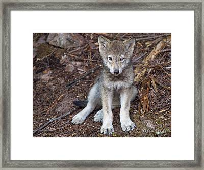 Young And Innocent.. Framed Print