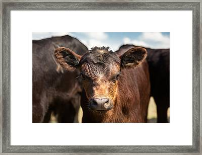 Young Angus Framed Print by Todd Klassy
