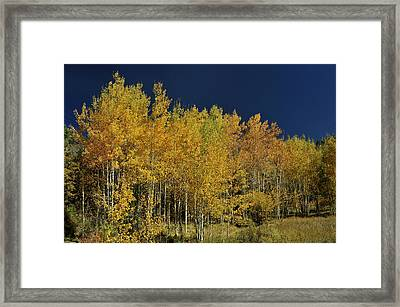 Young Aspen Family Framed Print