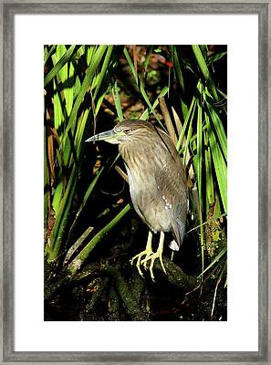 Young Beauty Framed Print by Christiane Schulze Art And Photography
