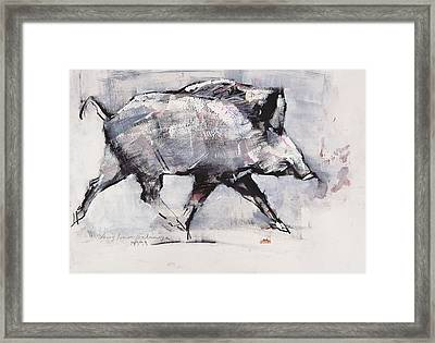 Young Boar Framed Print by Mark Adlington