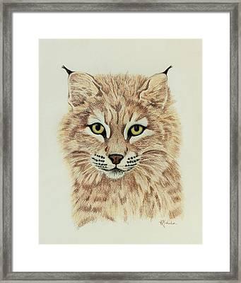 Young Bobcat Framed Print by Karen Mahnken
