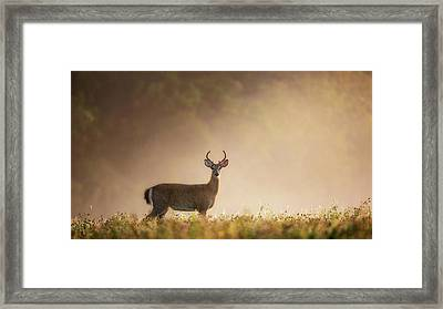 Young Buck Framed Print by Bill Wakeley