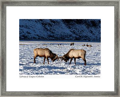 Framed Print featuring the photograph Young Bull Elk In Jackson  Hole In Wyoming by Carol M Highsmith
