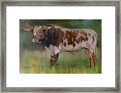 Young Bull Framed Print by Mary Leslie