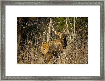 Framed Print featuring the photograph Young Bull On A Woodland Trail by Michael Dougherty