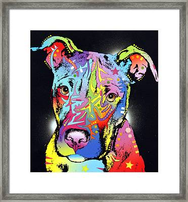 Young Bull Pitbull Framed Print