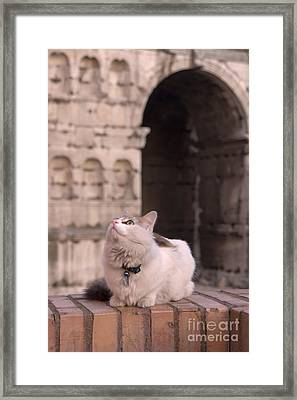 Young Cat Old Monument Framed Print by Fabrizio Ruggeri