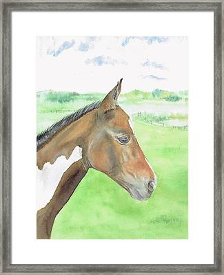 Young Cob Framed Print