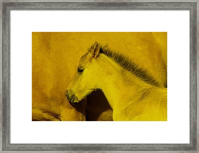 Young Colt Staying Close To Its Mother Framed Print by Jeff Swan