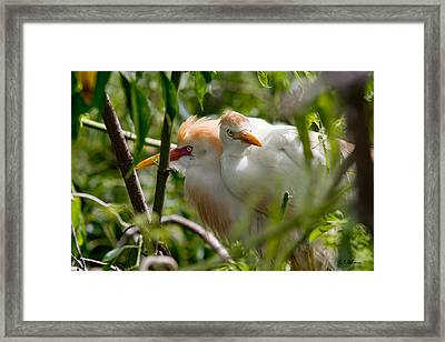 Young Couple Framed Print by Christopher Holmes