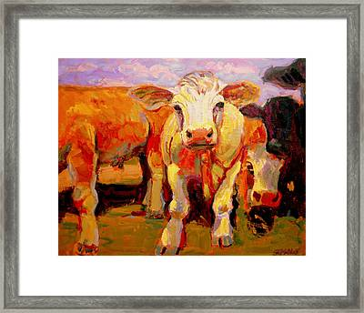 Young Cow Framed Print by Brian Simons