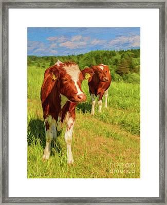 Young Cows Framed Print by Veikko Suikkanen