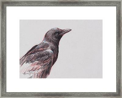 Young Crow 1 Framed Print by Tracie Thompson