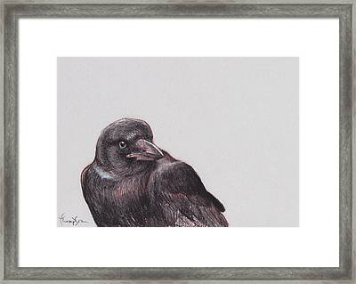 Young Crow 2 Framed Print by Tracie Thompson
