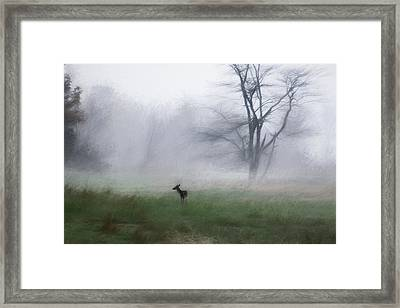 Young Deer And Tree Framed Print