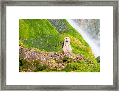 Young Eagle Owl Framed Print by Bryan Attewell