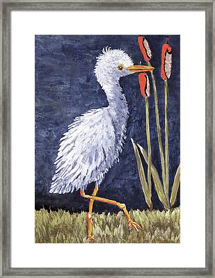 Young Egret Takes A Walk Framed Print