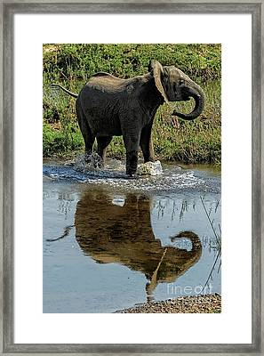 Young Elephant Playing In A Puddle Framed Print
