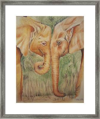 Young Elephants Framed Print