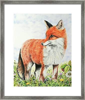 Young Fox Framed Print by Elizabeth Cox