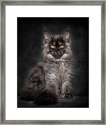 Young Gentleman Framed Print