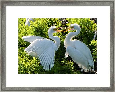 Young Great Egrets Playing Framed Print