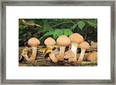 Young Honey Mushrooms Framed Print by Joshua Bales