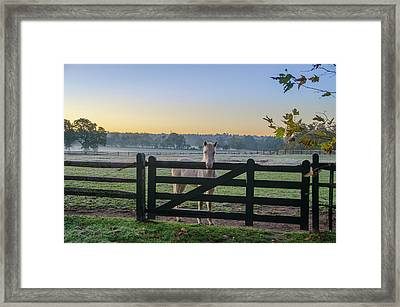Young Horse At Erdenheim Farms Framed Print
