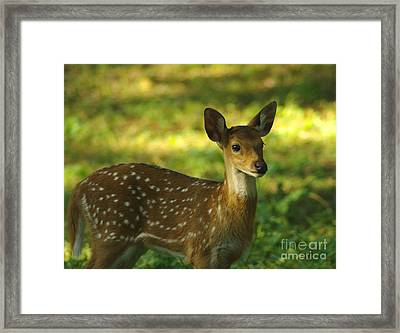 Framed Print featuring the photograph Young Indian Spotted Deer by Jacqi Elmslie