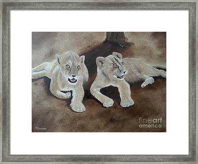 Young Lions Framed Print