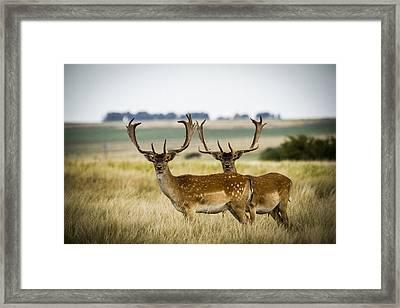 Deer In The Grassland Framed Print by Hernan Caputo