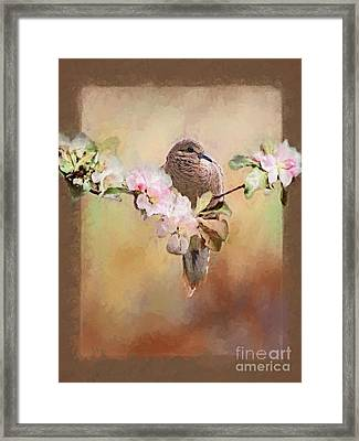 Young Morning Dove Framed Print by Suzanne Handel