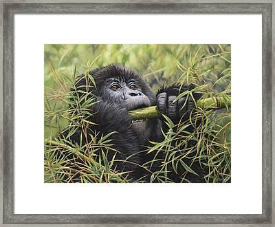 Young Mountain Gorilla Framed Print