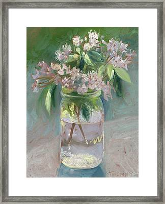 Young Mountain Laurels Framed Print
