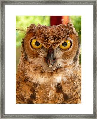 Young Owl Framed Print by Jan Bennicoff