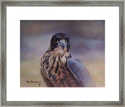 Young Peregrine Falcon Framed Print by Anna Franceova